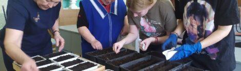 Подготовка к озеленению клумб